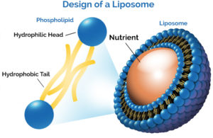 1-liposome-diagram