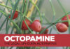 Octopamine- The Legal Ephedra Alternative