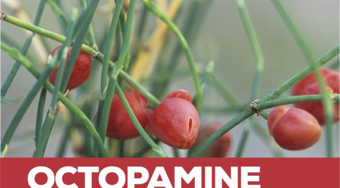 Octopamine- The Legal Ephedra Alternative