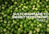 Myostatin